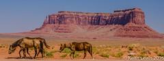 Horses roam in Monument Valley (keithhull) Tags: monumentvalley navaho sandstone landscape horses arizona unitedstates