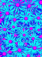 57763.13 Rudbeckia hirta (horticultural art) Tags: horticulturalart rudbeckiahirta rudbeckia flowers pattern psychedelic