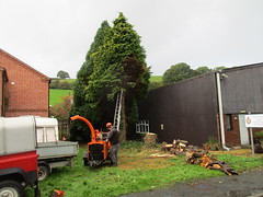 Removing Conifers (Tanllan) Tags: welshpool llanfair light railway railroad heritage workshop redevelopment tree felling chainsaw darren knibbs