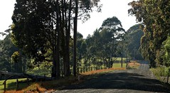 Along an Aussie Country Road (Lynne's Images) Tags: fence friday hff australia countryside road scenery fences trees