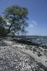 Lava rocks and sand on Koholo Beach, Big Island, Hawaii, USA (jackie weisberg) Tags: hawaii bigisland paradise vacation tourism adventure lush green islands lavarocks sand koholobeach usa beach jackieweisberg