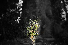 plants (ZKent.Yousif) Tags: yellow park nature statue canon canonsigma sigma1750mm sigma parks japan kanazawashi kanazawa
