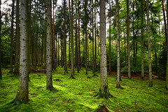 moss carpet (Beginner1970) Tags: nikon wald moos germany erfurt forest wood