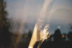 300/366 (Niko Saarinen) Tags: reflection art photoart hair autumn fall syys syksy dark melancholy finland suomi selfie tuusulanjrvi lake tuusula bokeh fujifilm xe2 fujinon35mm classicchrome