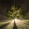 L'Arbre de Vie (Péef) Tags: tree arbre vie life treeoflife nikon peef péef