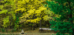 Autumn at Riverwood (Sohail-Siddique) Tags: art attraction blue canada clouds colors nikond7100 flower green images landscape leaves mississauga nature nikon ontario photography plants red serene sky sohailsiddique trees weather