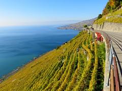 Take the long way home (oobwoodman) Tags: switzerland suisse schweiz lakegeneva lake lac lman leman genfersee lausanne lavaux grapes corniche vignoble vignes vineyards vin wein trauben rebe vendange see vaud epesses stsaphorin dzaley calamin