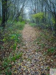 L'intense discrétion/The intense discretion/Den intensiva diskretion [Explore] (Elf-8) Tags: fall autumn shade color colour pale soft mute sad damp