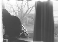 Ilford HP5 Plus - B&W - Home Developed - Faceless Pussy (TempusVolat) Tags: gareth wonfor tempusvolat tempus volat garethwonfor mrmorodo black white mono film dev developed id11 ilford homedeveloped selfdeveloped 35mm hp5 ilfordhp5 monochrome bw epson perfection v200 scan scanner scanning scanned
