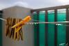 Untitled (bartslaby) Tags: autumn rain drops wet balcony clothespins soaking laundry clips