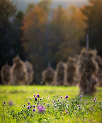 Jamtli, Östersund, September 20, 2016 (Ulf Bodin) Tags: hayrack höst autumncolours sverige volme canonef100400mmf4556lisiiusm klöver museum clover canoneos5dsr sweden outdoor autumn östersund jamtli jämtlandslän se vertorama