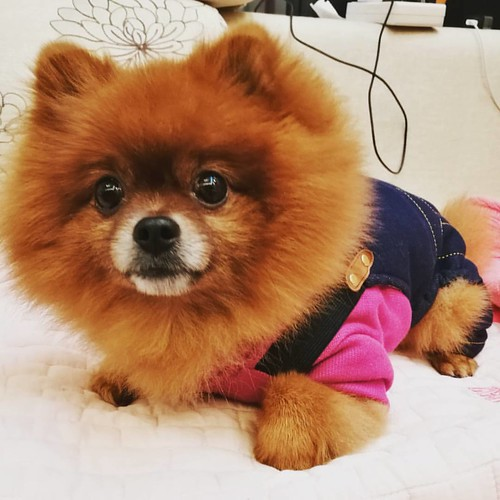 New coat for my baby~ It's only -1~5℃ today......