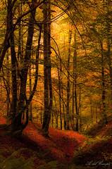 Soul of the forest. (A. del Campo) Tags: naturaleza nikon nature nikkor nikond7000 naturallight natural trees rboles bosques forest autumn otoo light shadows luz sombras color colores colors asturias parquederedes espaa spain landscape paisaje