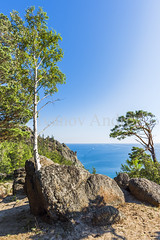 The trees grow right on the rocks (Ivanov Andrey) Tags: lake water rock cliff coast stone moss birch wood sand bay surf wave sky cloud horizon sun sunset evening blue skyblue green black trunk branch crown leaf bark rootwood wind coastline landscape shade wildlife travel tourism summer north lakebaikal russia