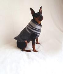 6_1 (julializard) Tags: dogsweater minpin pinscher dogclothing dog smallbreed