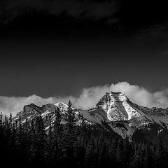 sheep area 9 (solidified_images) Tags: fuji xpro2 kananaskis canada alberta monochrome mountains rockies trees landscape