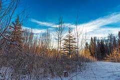 (plank_mike) Tags: winter snow forest ice cold sun sunrise sky clouds nature nikon image photo photography outside alaska fairbanks blue white