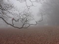 Walking to the Station (ART NAHPRO) Tags: misty foggy mist fog etchingham sussex rural weal wealden winter december 2016 trees lane