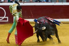 DSC_9320.jpg (josi unanue) Tags: animal blood spain bull arena bullfighter sansebastian esp toro traje asta sangre espada bullring unanue guipuzcoa matador torero tauromaquia sufrimiento cuerno urea banderilla banderilero