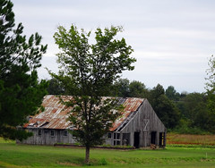 Windblown Barn (Wits End Photography) Tags: wood old sky plant building tree green texture abandoned nature grass architecture clouds barn rural america outside woods alone exterior outdoor decay farm kentucky country gray neglected lawn structure pale southern faded forgotten american worn lone weathered discarded forsaken left solitary paducah rejected grounds turf bleached sod faint outcast washedout dumped castaside discolored