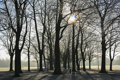 A Winters day, Leicester (Marie-Louise Garratt) Tags: city winter shadow sun snow tree silhouette landscape cityscape leicestershire leicester wintertime