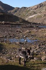 IMG_4338 (theresa.hotho) Tags: camping en france saint montagne de hiking donkey grand pic tent alpe dhuez besse anes rousses sorlin letendard stjeandarves eselwandern