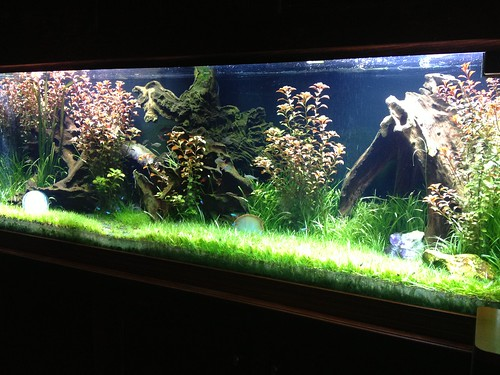 Live Planted Aquarium - Private Residence - CT - 4