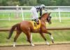 "2015-08-23 (14) r1 Luis Garcia on #4 Blimey (JLeeFleenor) Tags: photos photography md marylandracing laurelpark jockey جُوكِي ""赛马骑师"" jinete ""競馬騎手"" dżokej jocheu คนขี่ม้าแข่ง jóquei žokej kilparatsastaja rennreiter fantino ""경마 기수"" жокей jokey người horses thoroughbreds equine equestrian cheval cavalo cavallo cavall caballo pferd paard perd hevonen hest hestur cal kon konj beygir capall ceffyl cuddy yarraman faras alogo soos kuda uma pfeerd koin حصان кон 马 häst άλογο סוס घोड़ा 馬 koń лошадь maryland"