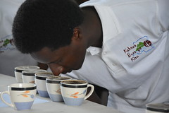 Congolese coffee rises again (USAID Democratic Republic of Congo) Tags: usaid coffee starbucks congo drc southkivu