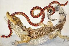 Anglų lietuvių žodynas. Žodis spectacled caiman reiškia akiniuotas kaimanas lietuviškai.