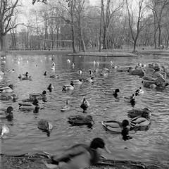 Krasiski Garden, Warsaw (M.M.A.K.) Tags: 6x6 mediumformat poland warsaw fujineopanacros100 fujifilmneopan100acros start66s film:brand=fuji film:iso=100 film:name=fujineopanacros100 filmdev:recipe=10499