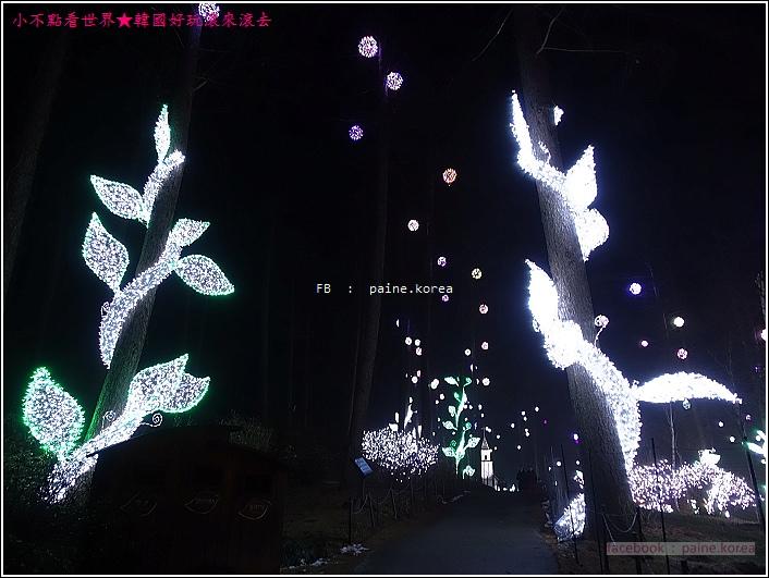 晨靜樹木園 五色星光庭園展 (30).JPG