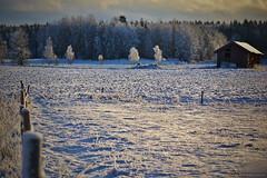 Vinter (MIKAEL82KARLSSON) Tags: old morning winter light vinter sweden natur sverige lada morgon åker gammal ljus naturbild mikael82karlsson