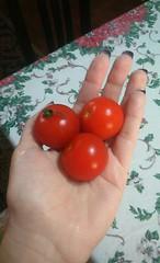 tomates (Natalia Sapienza) Tags: verde azul laranja vermelho marrom lilas camposdojordao breto
