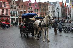 Bruges (dariusz_ceglarski) Tags: autumn horses horse canon belgium herfst belgi pferde pferd paard kon belgien belgio dariusz brgge belgia hestar hestur k brugia brugres