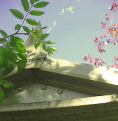 Gardeners fantasy (rachappleby) Tags: garden vintage style spontaneous flowers tools summer bright vibrant autumnal fantasy trend uninon plants