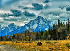 FOR THE BEAUTY OF THE EARTH ... (Aspenbreeze) Tags: 793 grizzly bear grizzlybear793 wyomingwildlife wildlife wildanimal outdoors rural nature mountains tetonmountains tetons grees snow clouds sky landscape wyominglandscape bevzuerlein aspenbreeze moonandbackphotography