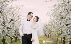 fotografia-slubna-swietliste-romantyczny-plener-sad-owocowy