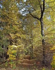 Herbst im Oktober. Autumn in October. (st.klaus612) Tags: herbst autumn natur natura bunt deutschland germany germania weg way bayern bavaria oberpfalz wow colorful pfad path laub leaves samsung s7