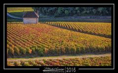 Clos Saint-Jacques 2 (mg photographe) Tags: vignes wine burgundy bourgogne gevrey chambertin or cte orange jaune vendanges paysage landscape sunset soleil