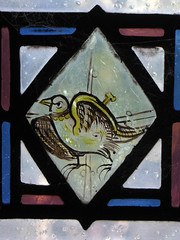 Bird (Aidan McRae Thomson) Tags: york minster cathedral yorkshire stainedglass window medieval