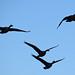November Geese
