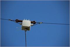 DL0HAL connection socket of trap dipole W3DZZ (gynti_46) Tags: hamradio dlohal darc w19 amateurfunk antenne antennas trapdipole