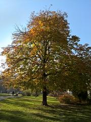 WP_20161118_10_49_09_Pro (vale 83) Tags: pioneers park belgrade serbia microsoft lumia 550 lunaphoto friends autofocus coloursplosion wpphoto wearejuxt