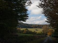gen Feldflur und zurck in die Sonne (luzifair) Tags: altenbrak herbst oktober harz wiese wald