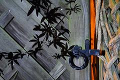 Day #3221 (cazphoto.co.uk) Tags: project366 beyond2922 251016 panasonic lumix dmcgh3 panasonic1235mmf28lumixgxvarioasphpowerois gate latch wooden shadows dark 2016th10