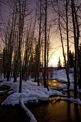 Springs Creek (John Andersen (JPAndersen images)) Tags: alberta bighillspringspark night snow springs stream waterfalls winter