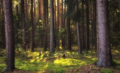 Forest (dannicamra) Tags: nikon d5100 germany bavaria bayern regenstauf forest landscape tree wald landschaft baum grn green autumn herbst outdoor nature