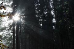 20161030-WOL_7724.jpg (viennalinux) Tags: spaziergang nebel herbst nature tauern fog natur ossiach ossiacher