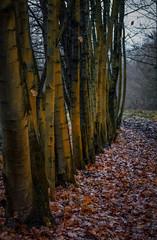 (Robert Hjek) Tags: autumn landscape nature nikon tamron czphoto czech forest